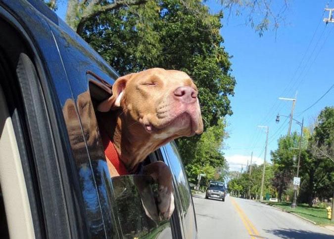 Собаки из приюта, которым повезло обрести новых хозяев