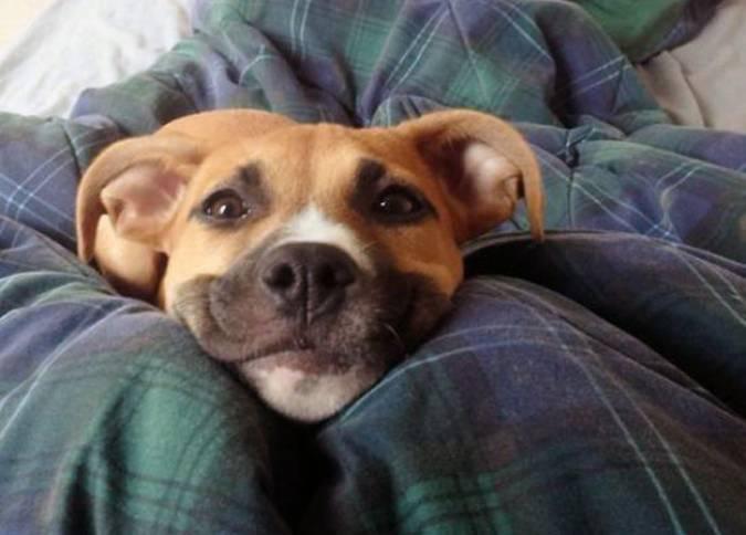 Позитив: Собаки-улыбаки
